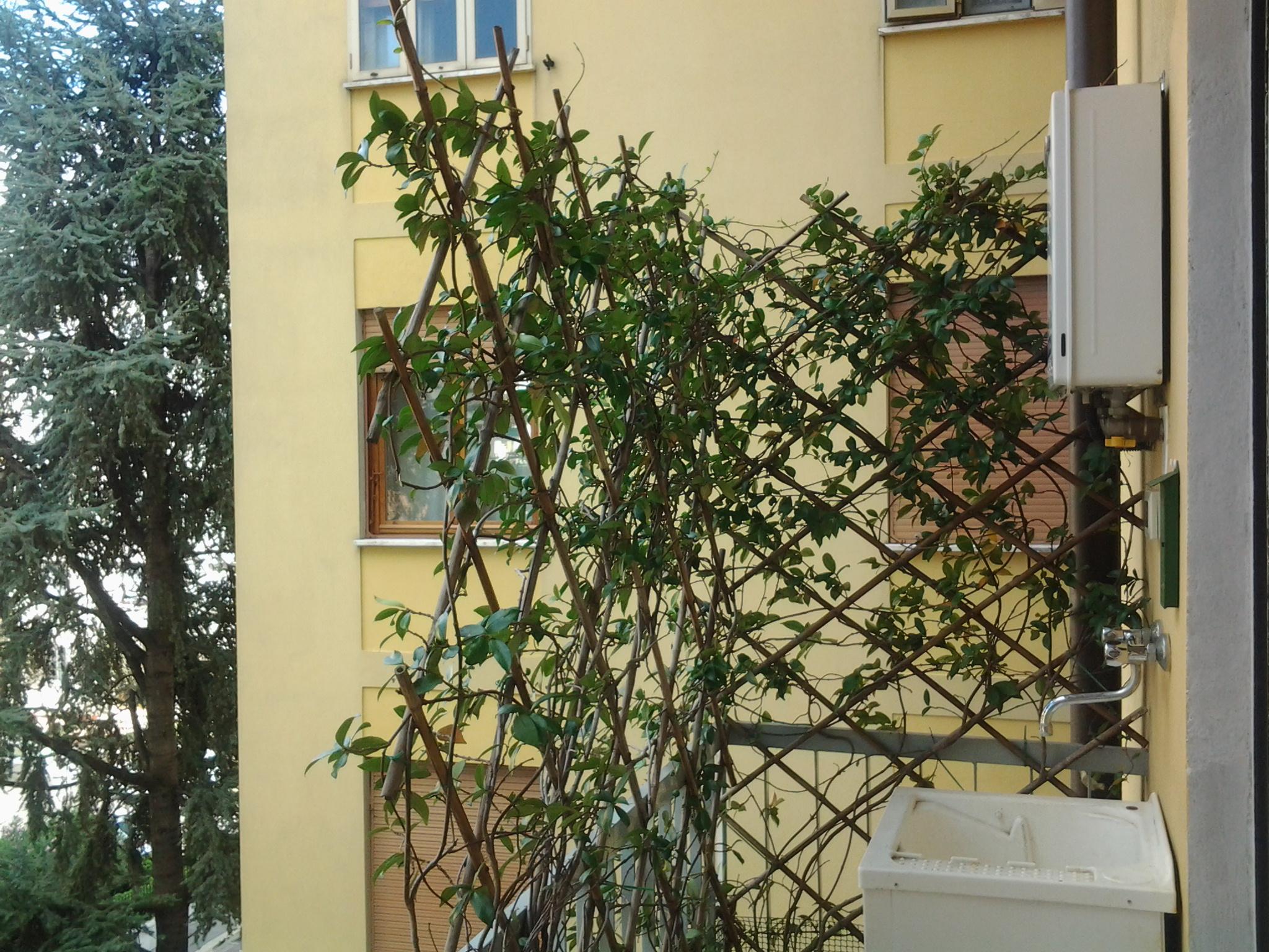 vendita appartamento sesto fiorentino   200000 euro  6 locali  65 mq
